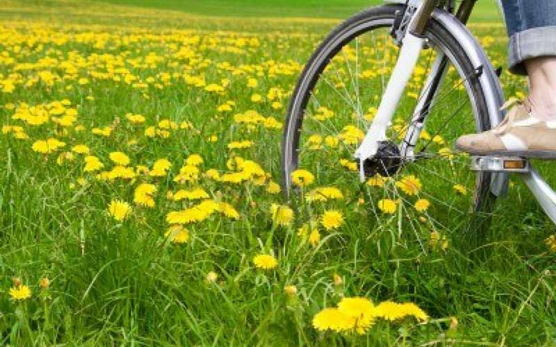 10501046-spring-meadow-with-blooming-dandelion-and-bicycle