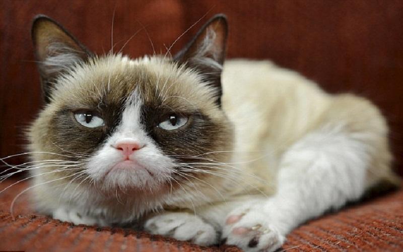 1BE1F14F000005DC-2864212-Internet_sensation_Grumpy_Cat_has_amassed_a_64million_fortune_mo-a-4_1417963545712