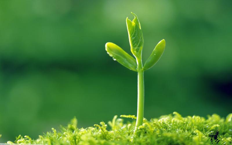 رشد و توسعه فردی