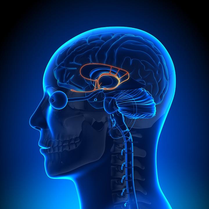 آمیگدال - اختلال اضطراب