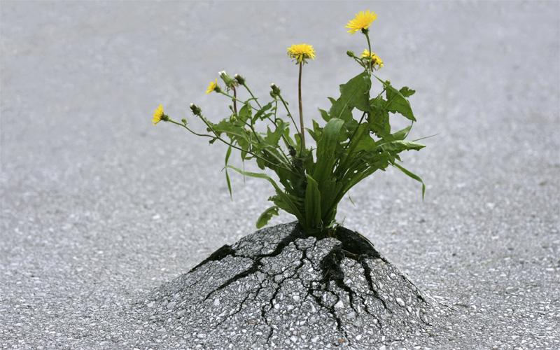 نترسیدن از سختی