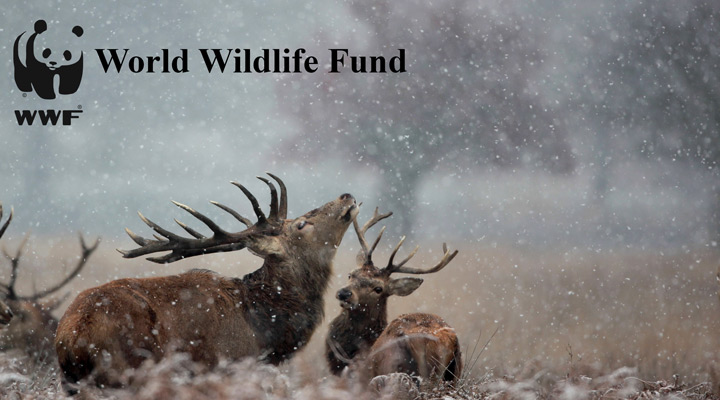وُرلد وایلدلایف فاند (World Wildlife Fund)
