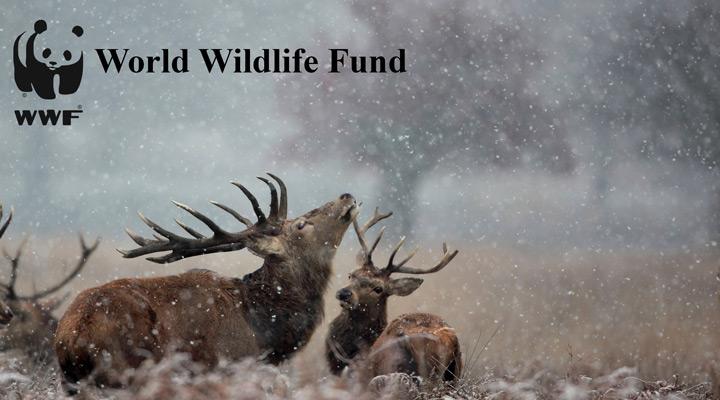وُرلد وایلدلایف فاند (World Wildlife Fund)