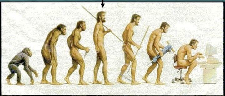 ناسازگاری تکاملی