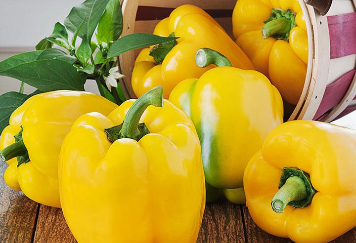 فلفل دلمهای از سبزیجات سرشار از ویتامین سی است.