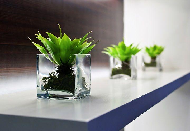 استفاده از گیاهان در محل کار
