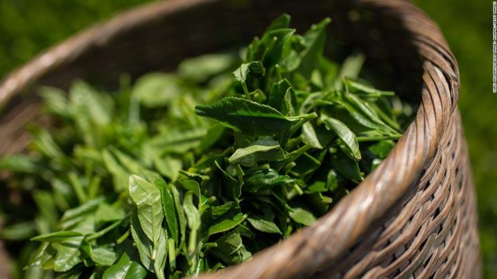 گیاه چای سبز-خواص چای سبز