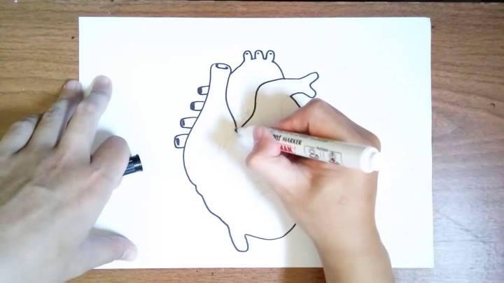 راه های تقویت حافظه برای درس خواندن - رسم کردن قلب انسان