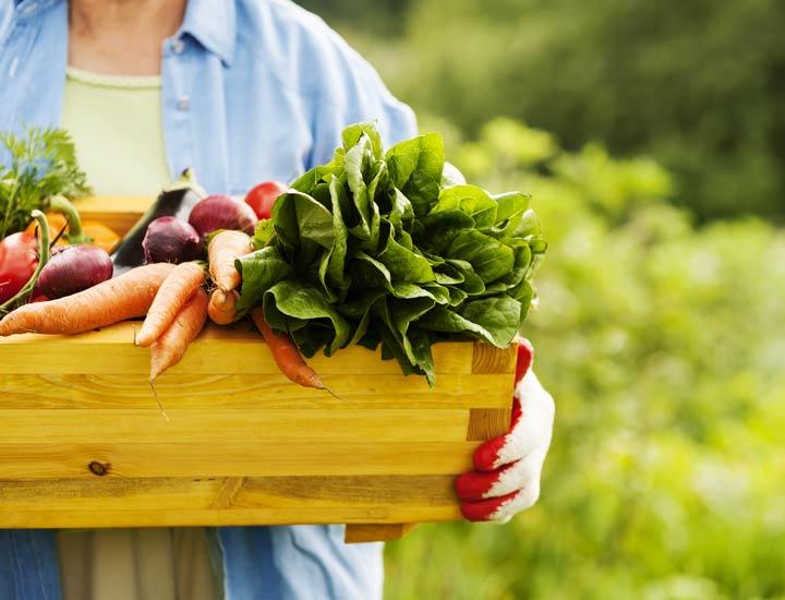 مقابله با آلودگی هوا - برای کاهش آلودگی هوا خودتان به پرورش میوه و سبزیجات بپردازید