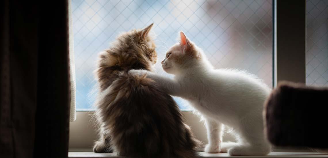 همدلی چیست و چه نشانههایی دارد