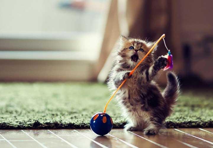 عکس بچه گربه به تقویت حافظه کمک میکند