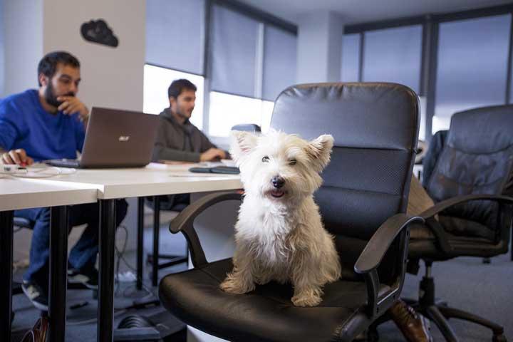 حیوانات خانگی در محل کار گوگل