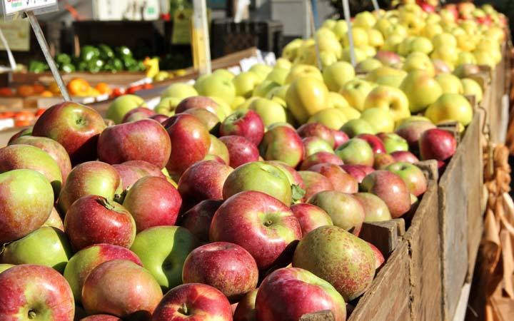سیب در میان میوه های لاغر کننده