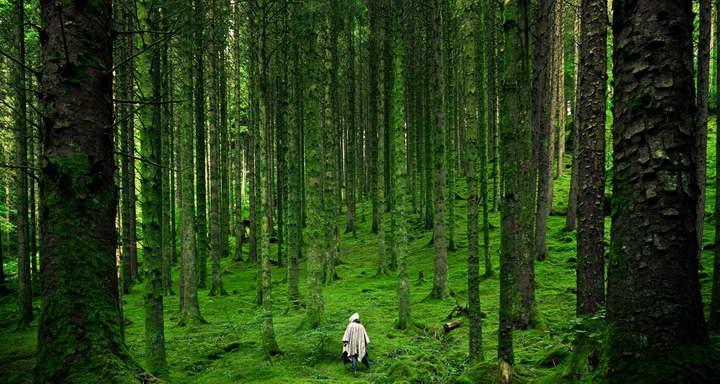 برای درمان استرس حمام جنگل بگیرید
