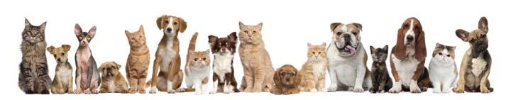نگهداری از حیوانات خانگی و کاهش خطر سکته قلبی و مغزی