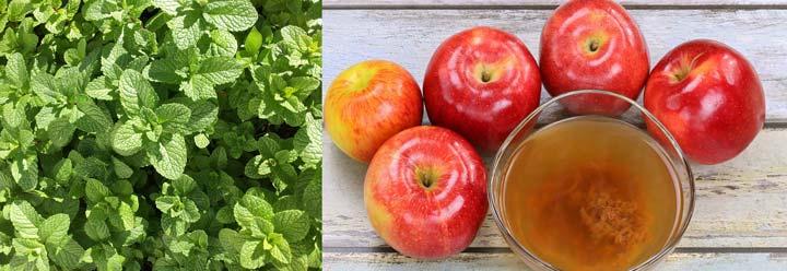 تونر سرکه سیب و نعناع برای درمان جوش های سرسیاه
