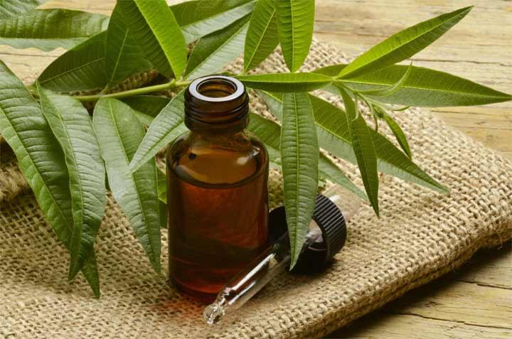 روغن درخت چای - آبرسانی به مو
