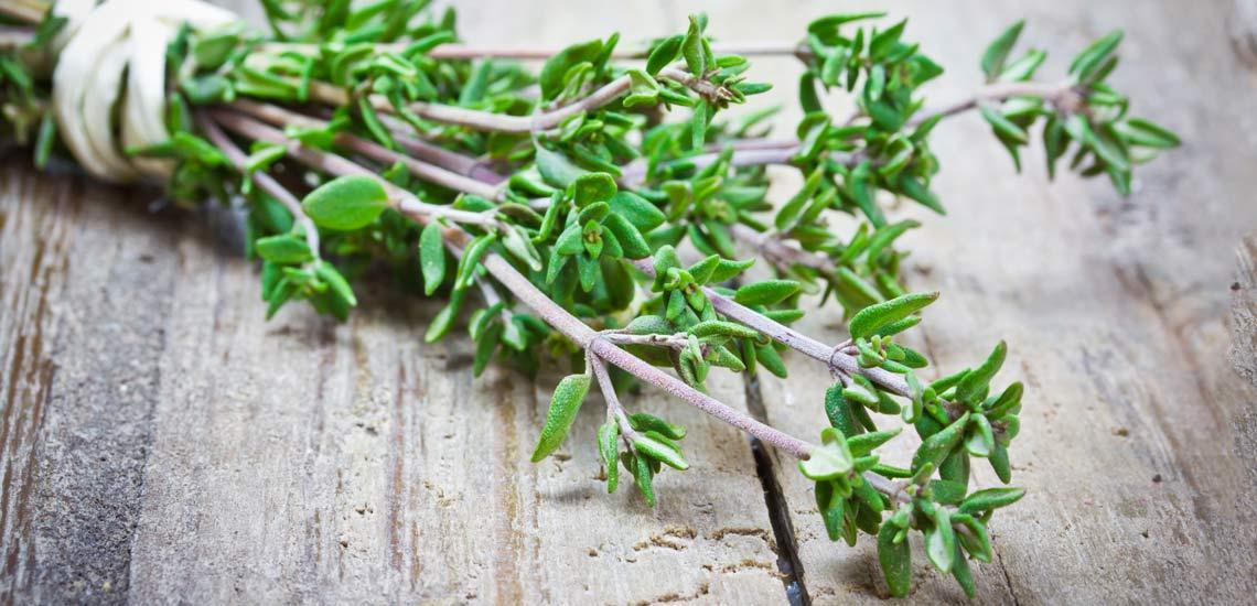 خواص آویشن؛ ۶ خاصیت دارویی این گیاه شگفتانگیز