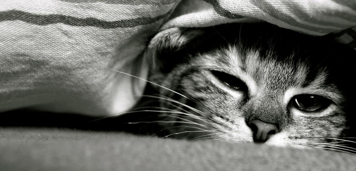 چرا گاهی صبحها خسته از خواب بیدار میشویم؟