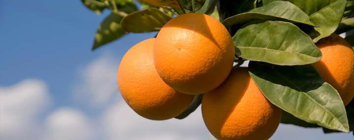 پرتقال - ماسک سفید کننده صورت