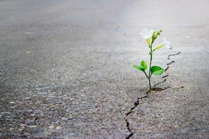 جملات امید بخش
