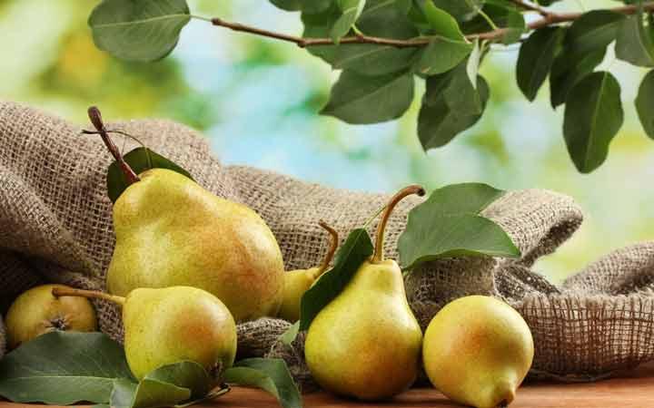 گلابی - ۱۰ میوه مفید برای دیابتیها