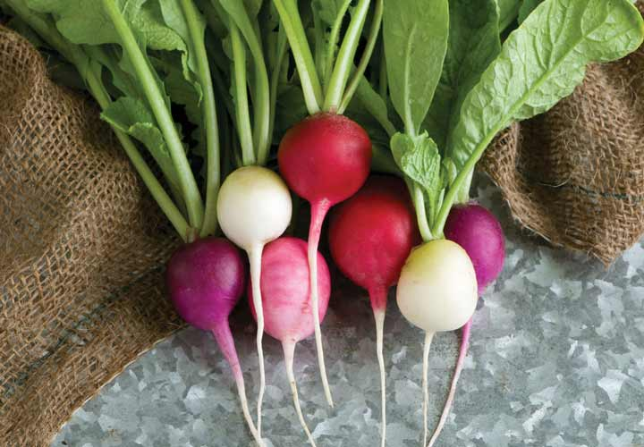 تربها سرشار از ویتامین ث بوده و جزو ۳۶ غذای کم کالری محسوب می شوند.