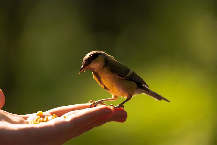 به دیگران آزادی بدهید - انگیزه دادن
