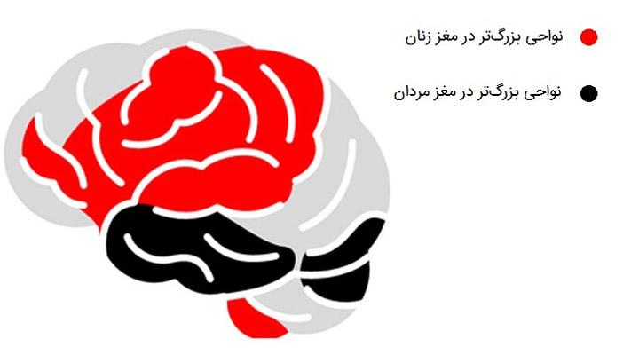 نواحی بزرگتر مغز زنان و مردان