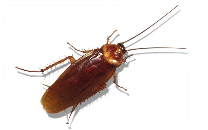 از بین بردن حشرات - سوسکها
