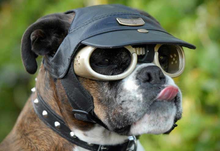 ایده های به ظاهر احمقانه - عینک آفتابی برای سگ