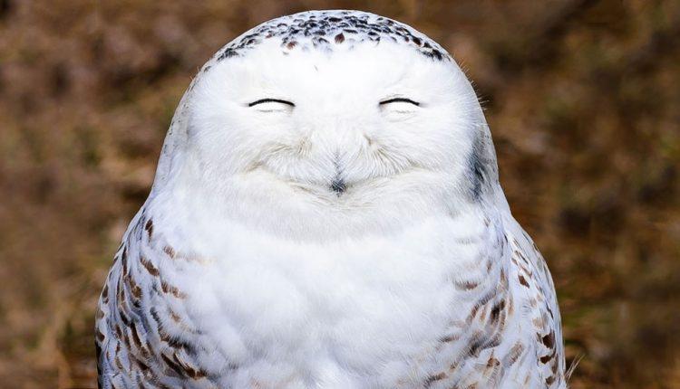 ۱۰ روش علمی برای اینکه همیشه خوشحال باشید