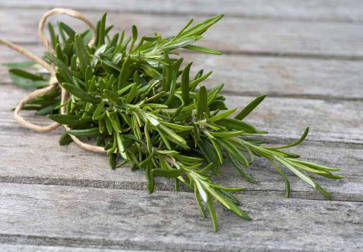 رزماری گیاهی از خانواده نعنائیان و دارای خواص بسیاری برای سلامتی است.