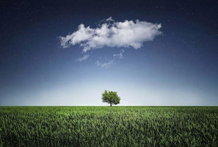 زندگی چیست - شکلگیری معنا در ذهن
