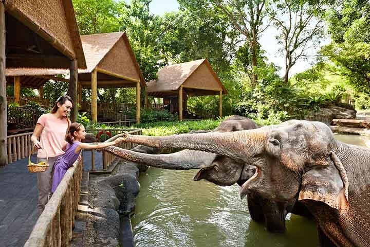 باغوحش سنگاپور، از جاهای دیدنی سنگاپور