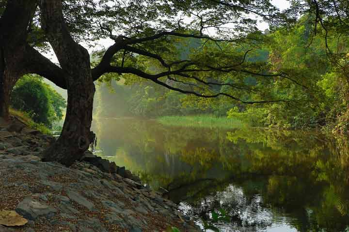 جنگل روحبخش