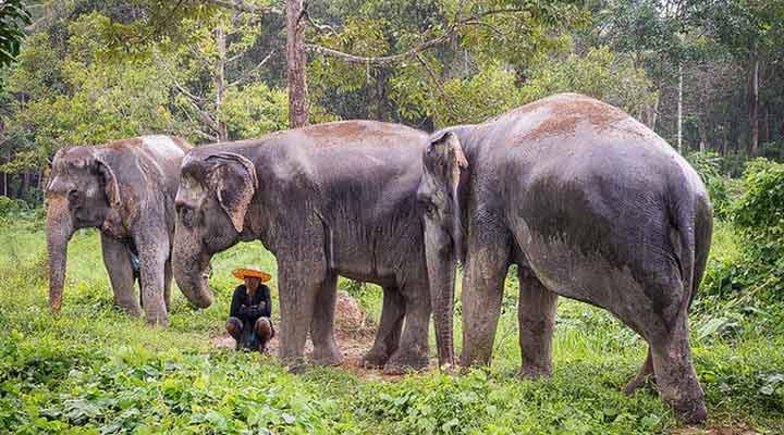جاهای دیدنی پوکت - امانگاه فیلها