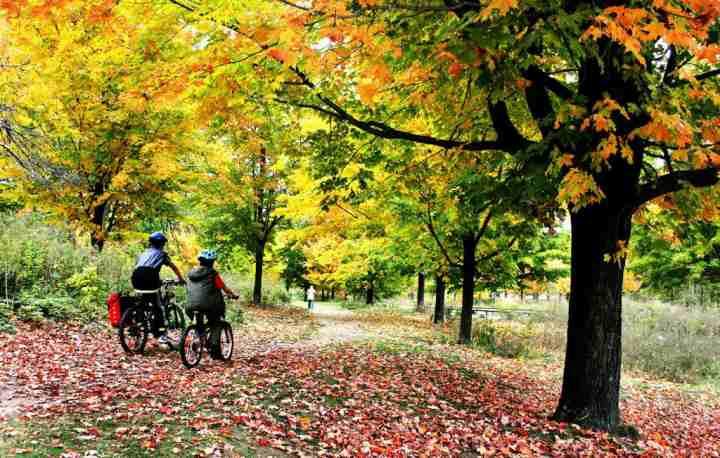 جاهای دیدنی تورنتو - های پارک (High Park)