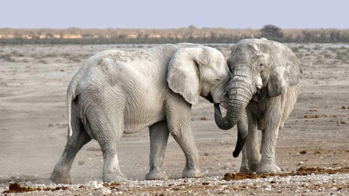 بانمک ترین حیوانات دنیا که میتوانند واقعا خطرناک باشند