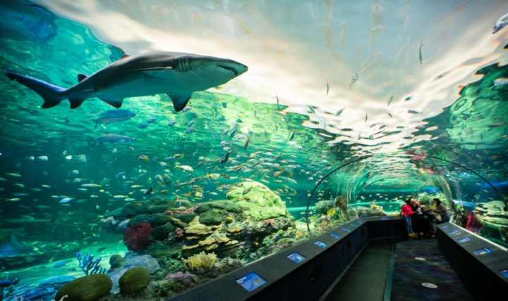 جاهای دیدنی تورنتو - آکواریوم ریپلی کانادا (Ripley's Aquarium of Canada)