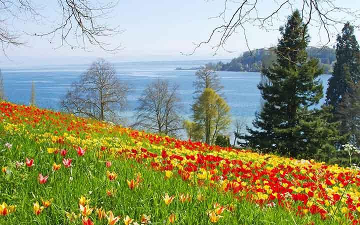 جاهای دیدنی آلمان - جزیرهی گلهای دریاچهی کُنستانس
