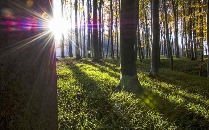 جاهای دیدنی اتریش - جنگل وین