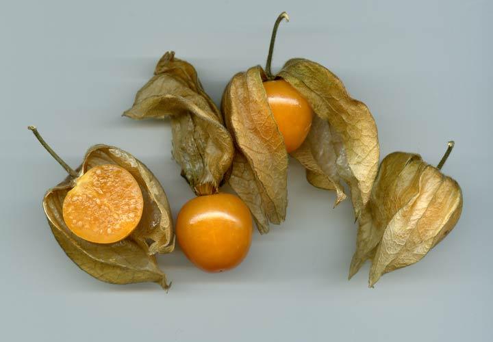 یکی از عجیب ترین میوه ها کاکنج یا فیسالیس نام دارد.