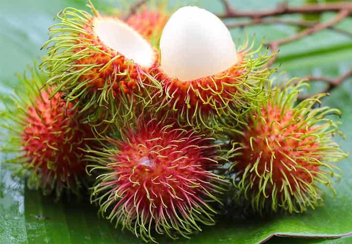 یکی از عجیب ترین میوه ها مژکی یا تاژین نام دارد.