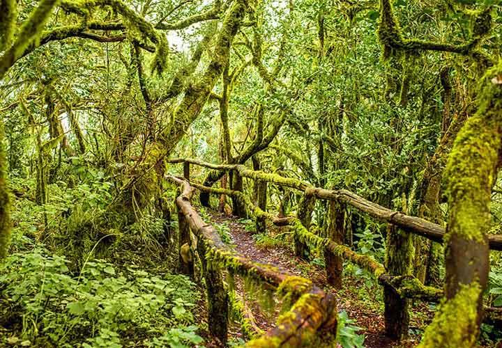 جزایر قناری - پارک ملی گاراخونای، لا گومِرا