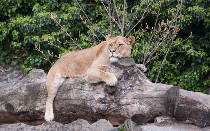 جاهای دیدنی هلند - باغوحش سلطنتی آرتیس