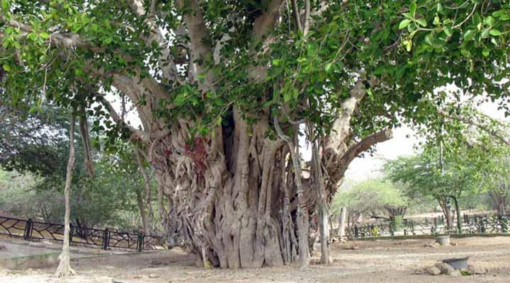 جاهای دیدنی کیش - مجموعهی درخت سبز