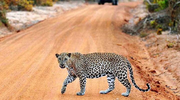 سفر به سریلانکا - حیاتوحش سریلانکا
