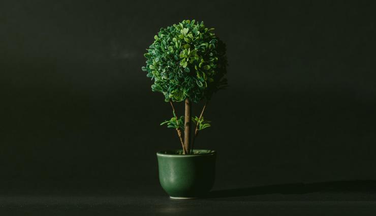 گیاهان آپارتمانی مقاوم؛ ۲۹ گیاه آپارتمانی که به خانه شما طراوت میبخشند