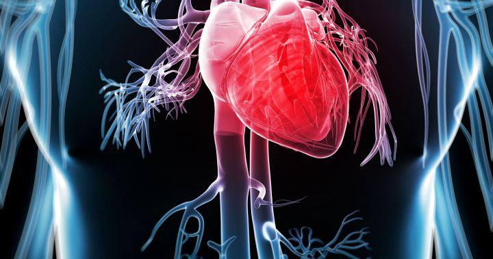 خواص شیرین بیان - کمک به افزایش سلامت قلب و عروق